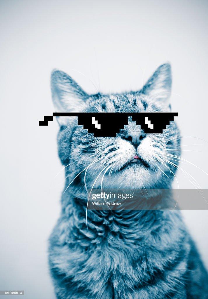 Cat wearing pixelated sunglasses : Bildbanksbilder