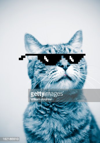Cat wearing pixelated sunglasses : Foto de stock