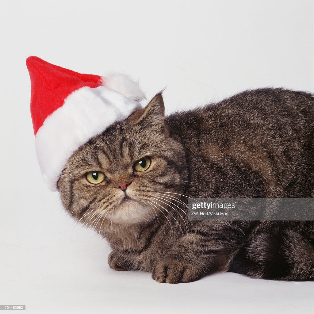 Cat wearing Santa Hat : Stock Photo