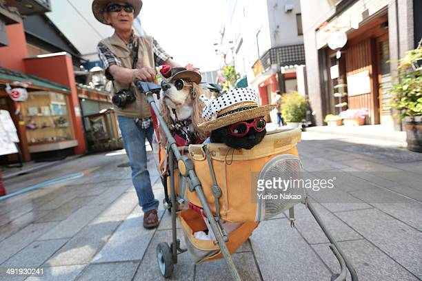 A cat wearing sunglasses and wearing a festive towel around her hat sits inside a stroller with dog also wearing glasses during the Sanja Festival at...