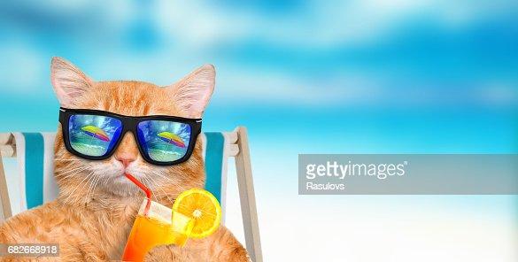 Cat wearing sunglasses relaxing sitting on deckchair. : Foto de stock