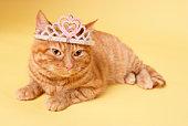 Cat wearing tiara