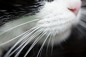 Cat nose and whiskers, macro side view with shallow depth of field, black background.
