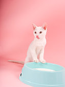 Cat with bowl of milk