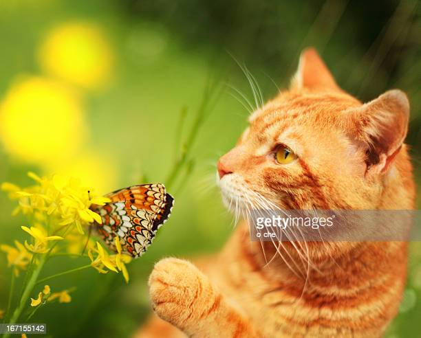 Cat with butterfly and flower