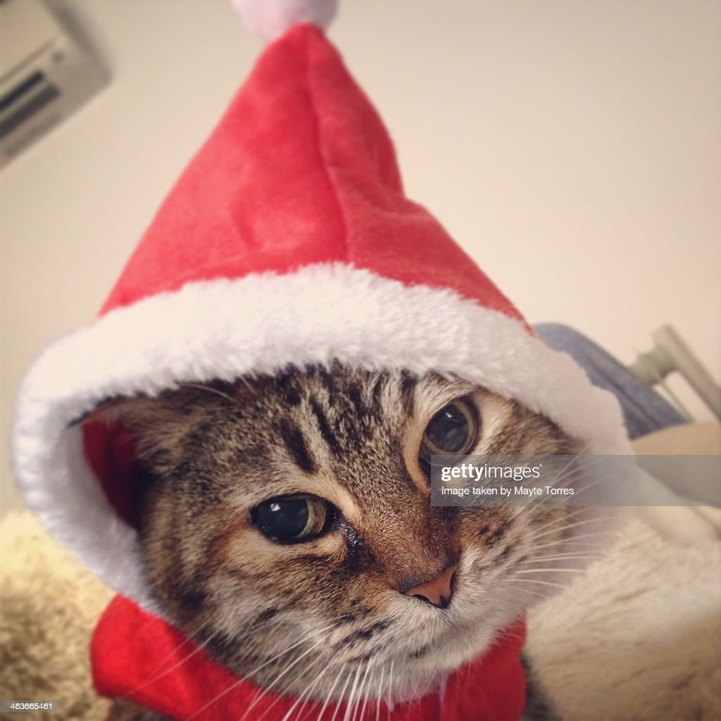 Cat with Christmas hat : Stock Photo