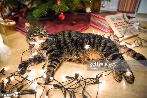 cat with christmas lights in front of a christmas tree
