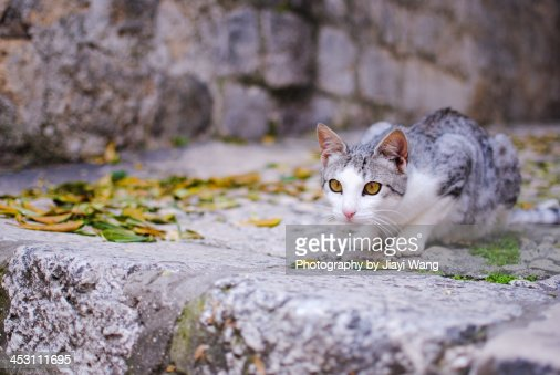 Cat with eyes matching its surroundings : Stock Photo