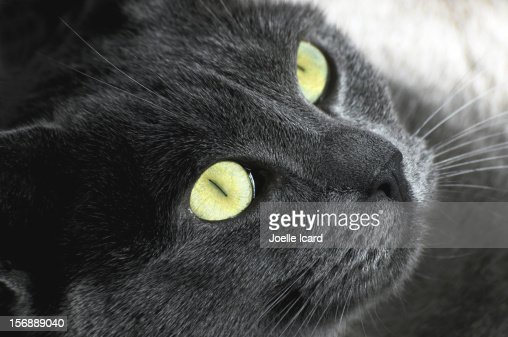 Cat with green eyes : Stock Photo