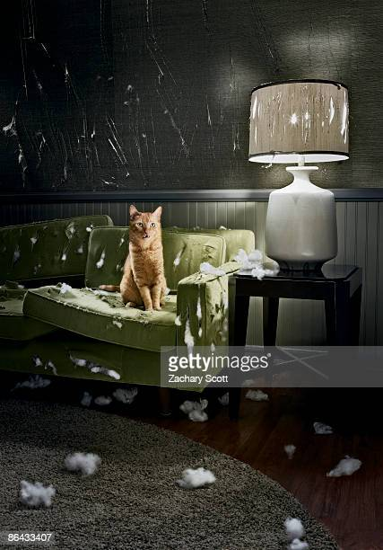 Cat with guilty look sitting on destroyed sofa