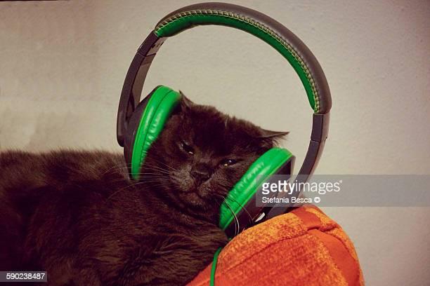 Cat with headphones