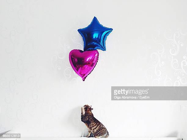 Cat With Helium Balloons Against White Wall