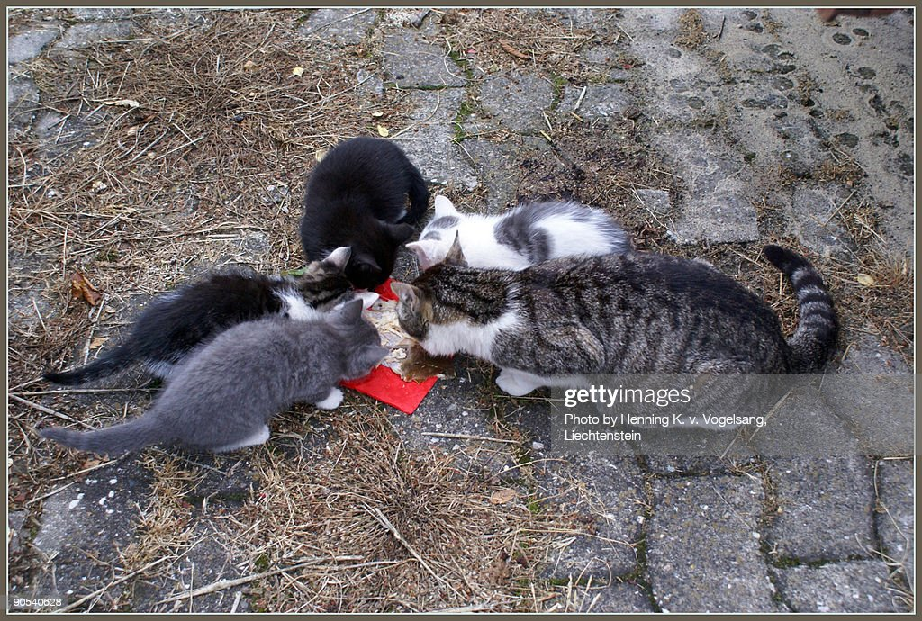 Cat with kids : Stock Photo