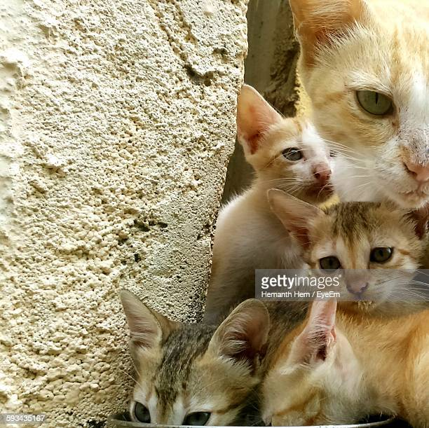 Cat With Kittens On Against Wall