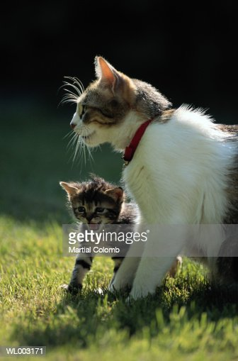 Cat with Kittens : Stock Photo