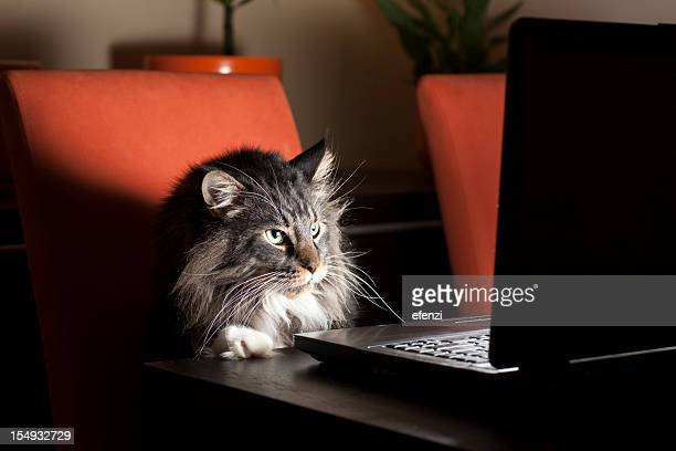 Cat With Laptop