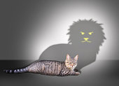 Profile of a house cat casting a lion shadow on a white wall .The screen content is designed by me and not is copyrighted by others and created with wacom tablet and PS