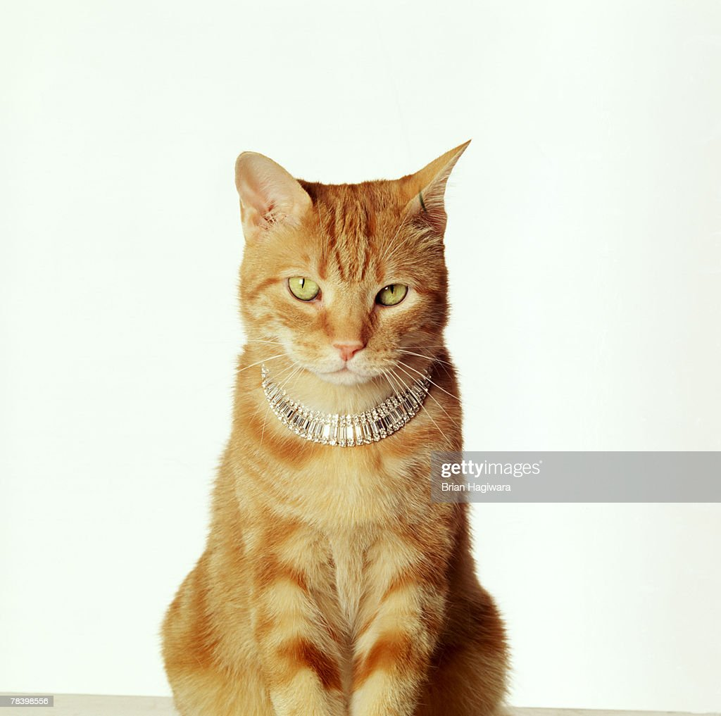 Cat with necklace : Stock Photo