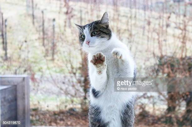 Cat with paws on the glass