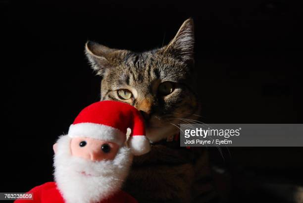 Cat With Santa Doll Against Black Background