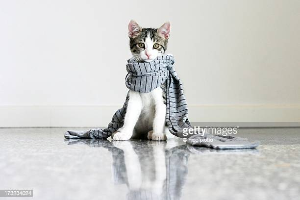 Cat with striped Scarf