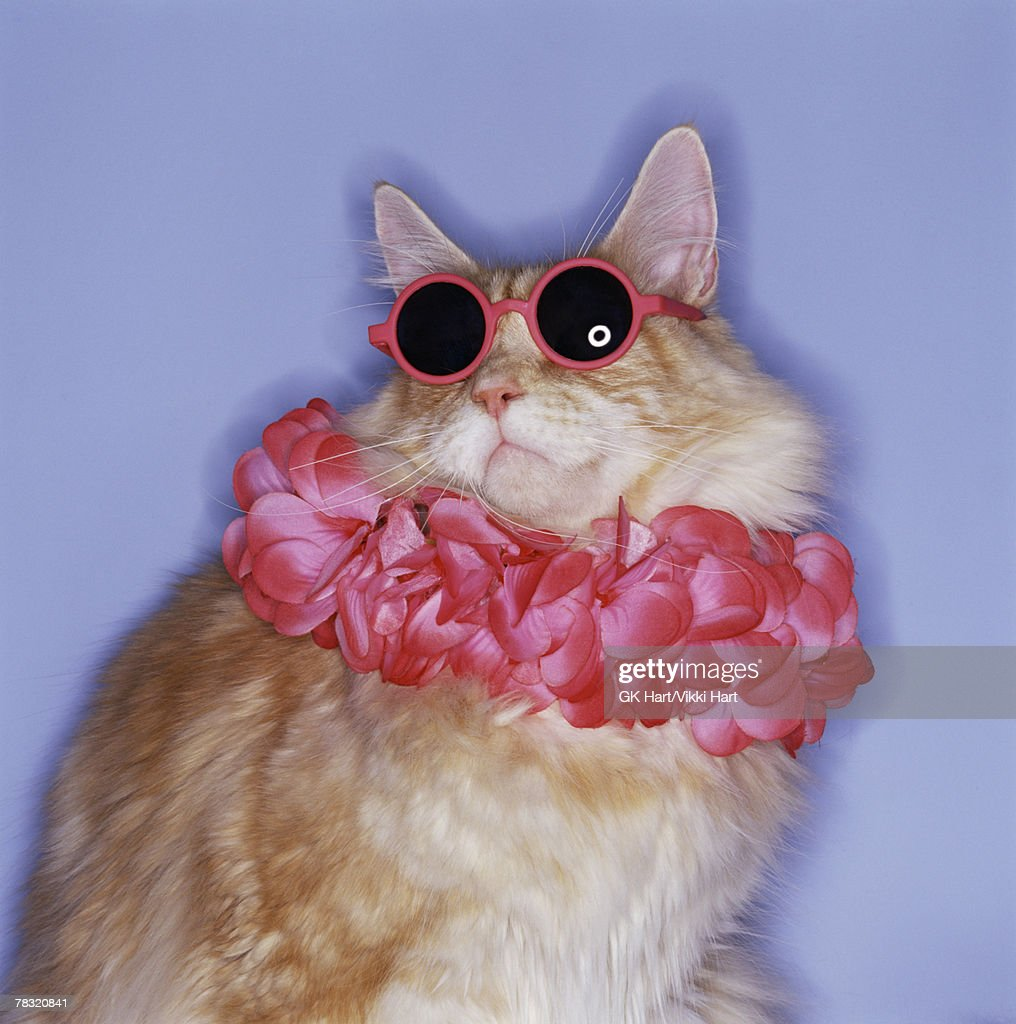 Cat with sunglasses and lei : Stock Photo
