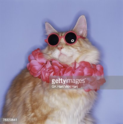 Cat with sunglasses and lei : Foto de stock