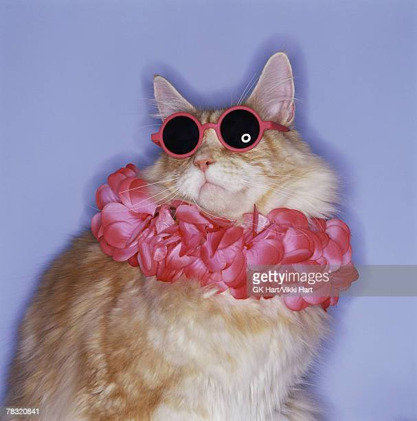 Cat with sunglasses and lei
