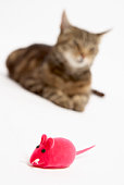 Cat with toy mouse