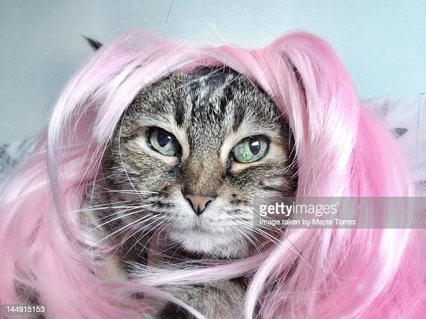 Cat with wig