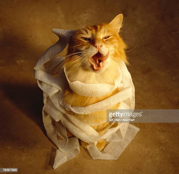 Cat wrapped in medical gauze