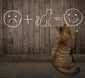 The cat writes a funny math equation in chalk on the wooden fence.