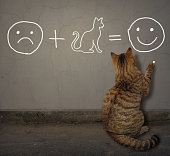 The cat writes a funny math equation in chalk on the gray wall.
