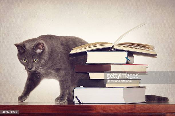 Cat wth books on a table
