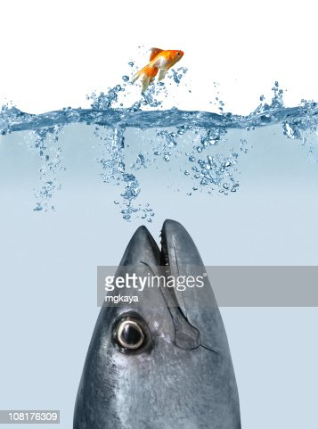 Catch Me If You Can : Stock Photo