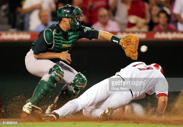 Catcher Damian Miller of the Oakland Athletics waits for the throw as Darin Erstad of the Anaheim Angels scores on a single by Troy Glaus in the...