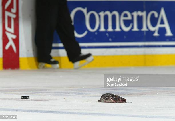 A catfish lies on the ice during the Detroit Red Wings game against the Nashville Predators at Joe Louis Arena on February 8 2006 in Detroit Michigan...