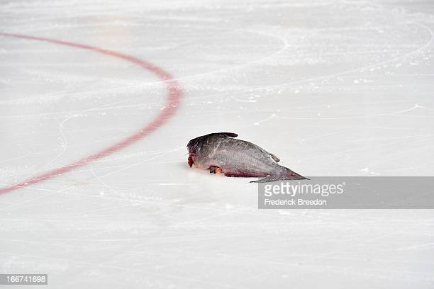 A catfish sits on the ice during a game between the Nashville Predators and the Detroit Red Wings at the Bridgestone Arena on April 14 2013 in...