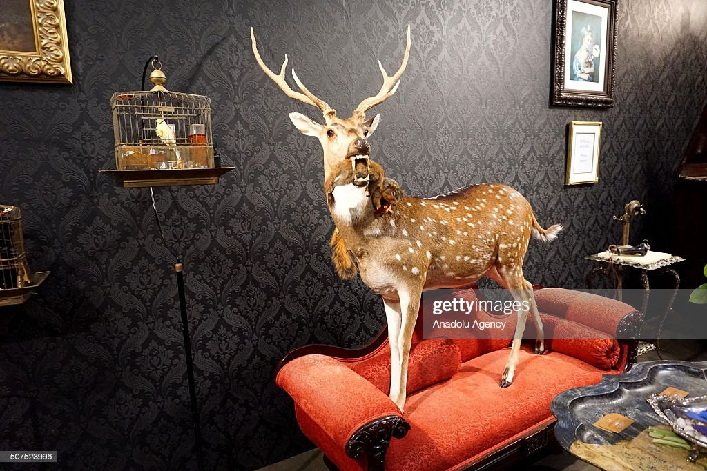 The Wild World of Taxidermy