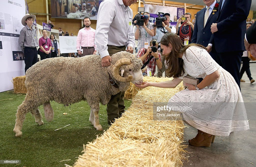 Catherine Duchess of Cambridge and Prince William Duke of Cambridge meet a ram called Fred as they visit the Sydney Royal Easter Show on April 18...