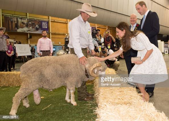 Catherine Duchess of Cambridge and Prince William Duke of Cambridge meet a ram called Fred as she visits the Sydney Royal Easter Show on April 18...