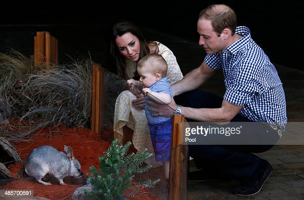 Catherine Duchess of Cambridge and Prince William Duke of Cambridge watch their son Prince George of Cambridge look at an Australian animal called a...