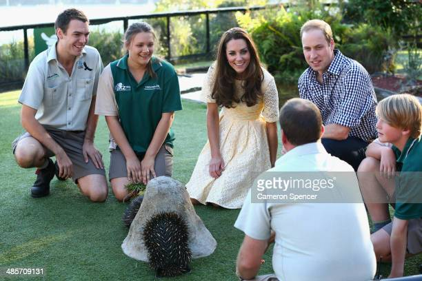 Catherine Duchess of Cambridge and Prince William Duke of Cambridge meet echidna's at Taronga Zoo on April 20 2014 in Sydney Australia The Duke and...
