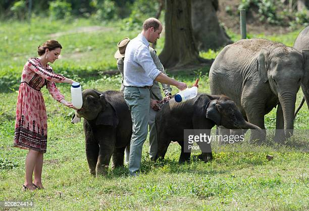 Catherine Duchess of Cambridge and Prince William Duke of Cambridge feed baby elephants during a visit to the Centre for Wildlife Rehabilitation and...
