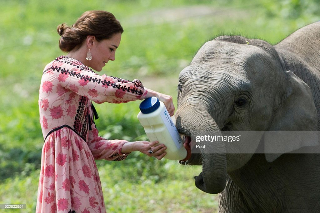Catherine Duchess of Cambridge feeds a baby elephant during a visit to the Centre for Wildlife Rehabilitation and Conservation at Kaziranga National...