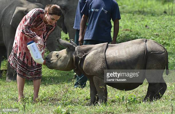 Catherine Duchess of Cambridge feeds a baby rhino during a visit to the Centre for Wildlife Rehabilitation and Conservation at Kaziranga National...