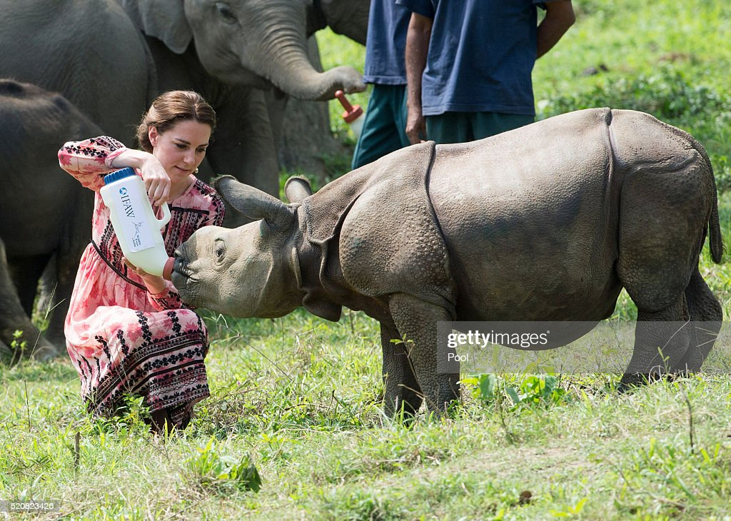 Catherine, Duchess of Cambridge feeds a baby rhinoceros during a visit to the Centre for Wildlife Rehabilitation and Conservation, at Kaziranga National Park on April 13, 2016 in Guwahati, India. The Duke and Duchess of Cambridge are on a week-long tour of India and Bhutan taking in Mumbai, Delhi, Assam, Bhutan and Agra.
