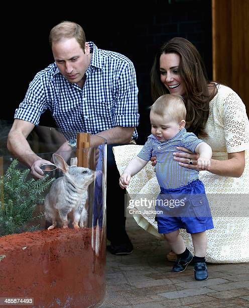 Catherine Duchess of Cambridge holds Prince George of Cambridge as Prince William Duke of Cambridge looks on whilst meeting a Bilby called George at...