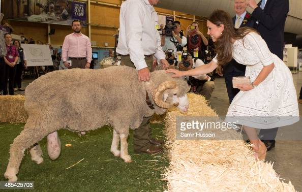 Catherine Duchess of Cambridge meets a ram called Fred as she visits the Sydney Royal Easter Show on April 18 2014 in Sydney Australia The Duke and...