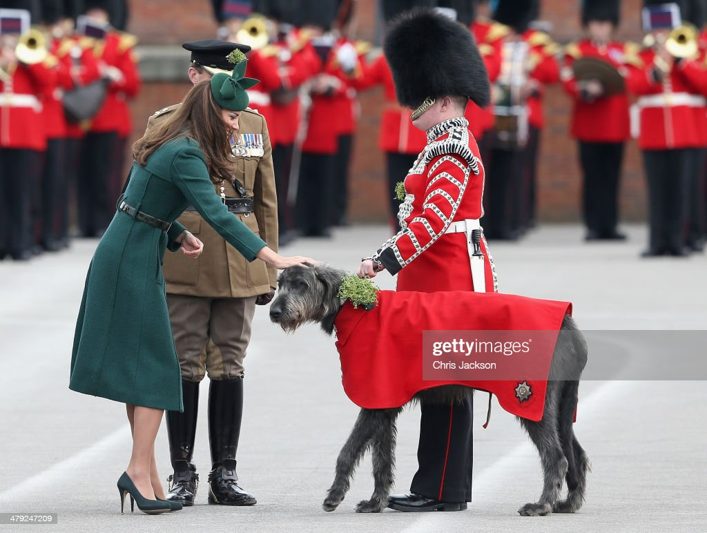 Catherine, Duchess of Cambridge presents a 'Shamrock' to Regimental Mascot Domhnall during the St Patrick's Day parade at Mons Barracks on March 17, 2014 in Aldershot, England. Catherine, Duchess of Cambridge and Prince William, Duke of Cambridge visited the 1st Battalion Irish Guards to present the traditional sprigs of Shamrocks to the Officers and Guardsmen of the Regiment.